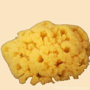 Sponges / Wedges